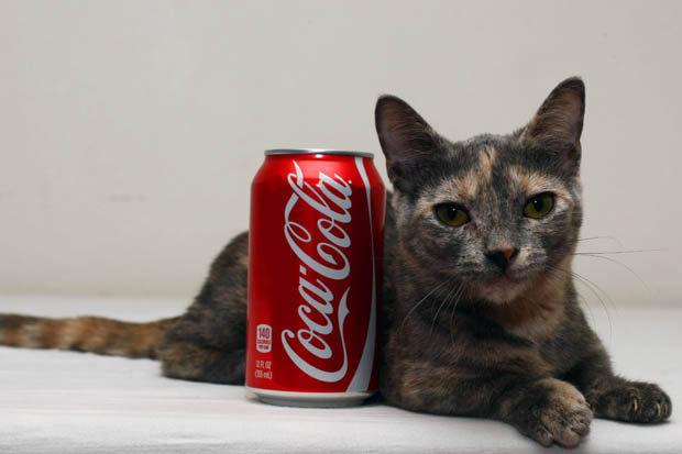 pixel_shortest_cat-386482